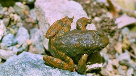 Frog Skin Oozes Possibly Powerful Antibiotic | Voice of