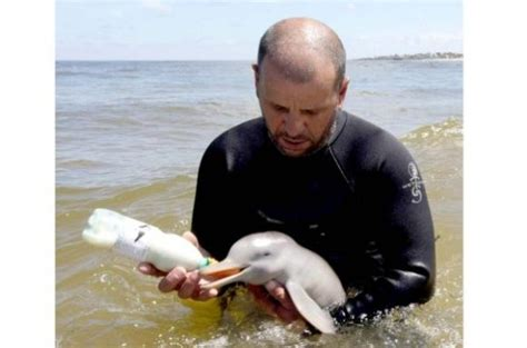 MUST SEE PHOTOS!: 7-Day-Old Baby Dolphin Rescued In